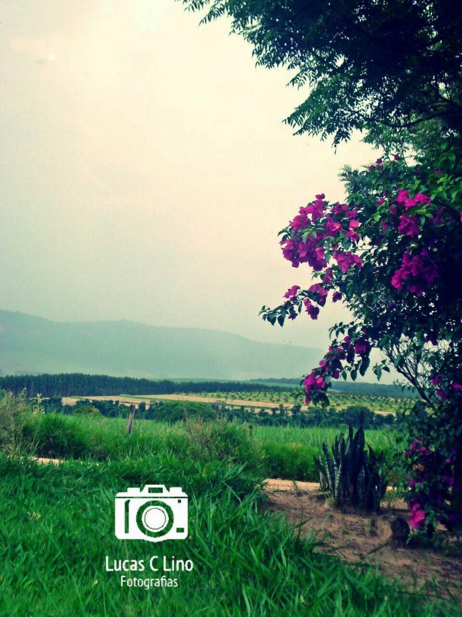 Fotografar virou uma paixão! Tree Nature No People Text Landscape Agriculture Beauty In Nature Outdoors Sky Day