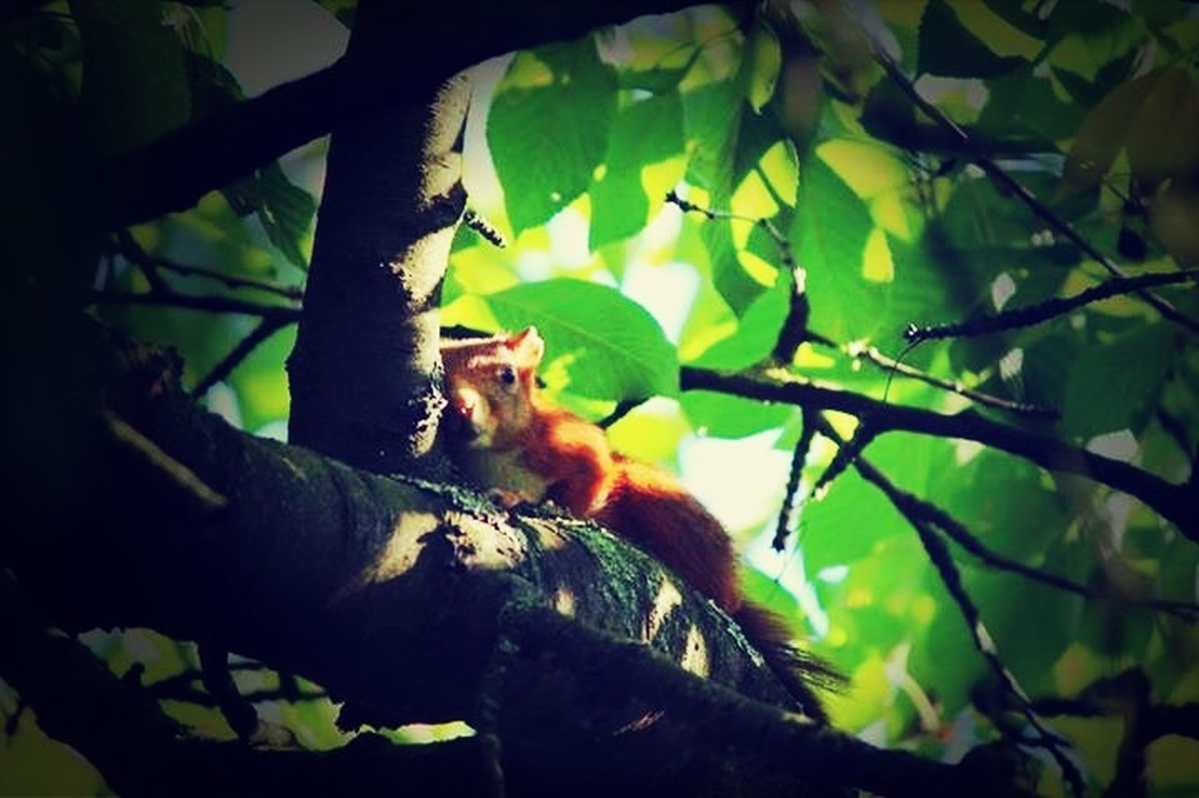 animal themes, one animal, tree, branch, mammal, low angle view, wildlife, animals in the wild, leaf, sitting, monkey, pets, domestic animals, nature, vertebrate, day, no people, zoology, tree trunk, outdoors