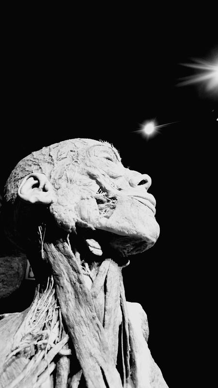 Bodyworlds  Black And White Face Mussels ArtWork
