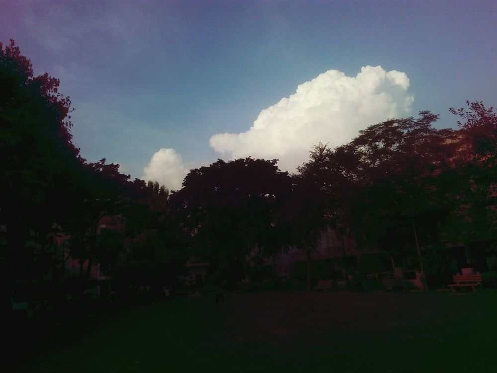 Lawn Trees Sky Cotton Like Up In The Sky Great View SSClickPics SSClicks Evening Light Mobile Photography