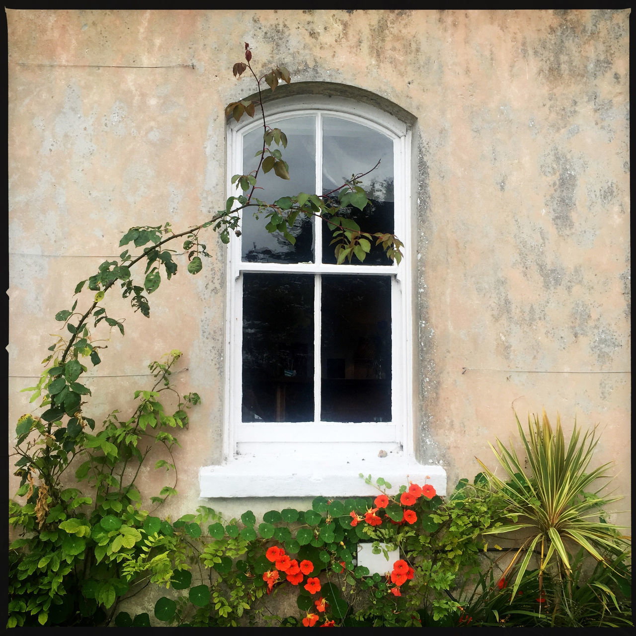 architecture, window, plant, growth, building exterior, built structure, flower, no people, outdoors, day, window box, nature