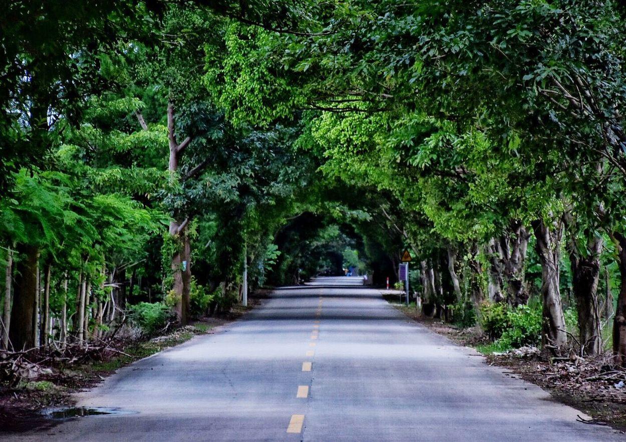 Grove Tree Wonderland Nature Stunning Shots Photography Beatiful Tree And Bushes