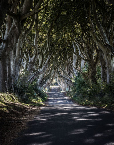 The dark hedges Branch Change Dark Haedges Day Forest Fountain Game Of Thrones Growth Long Exposure Lush Foliage Motion Mystery Narrow Nature Outdoors The Way Forward Tranquil Scene Tranquility Tree Tree Trunk Water Waterfall