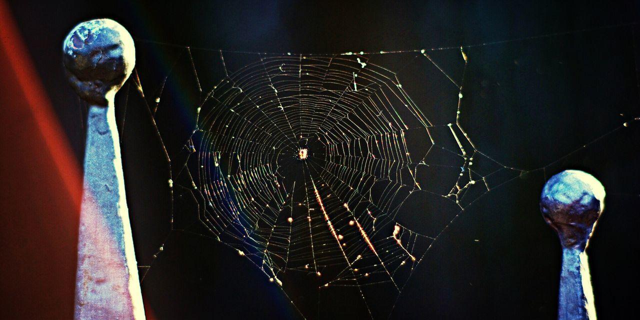 Rainbow Spider Web Nature