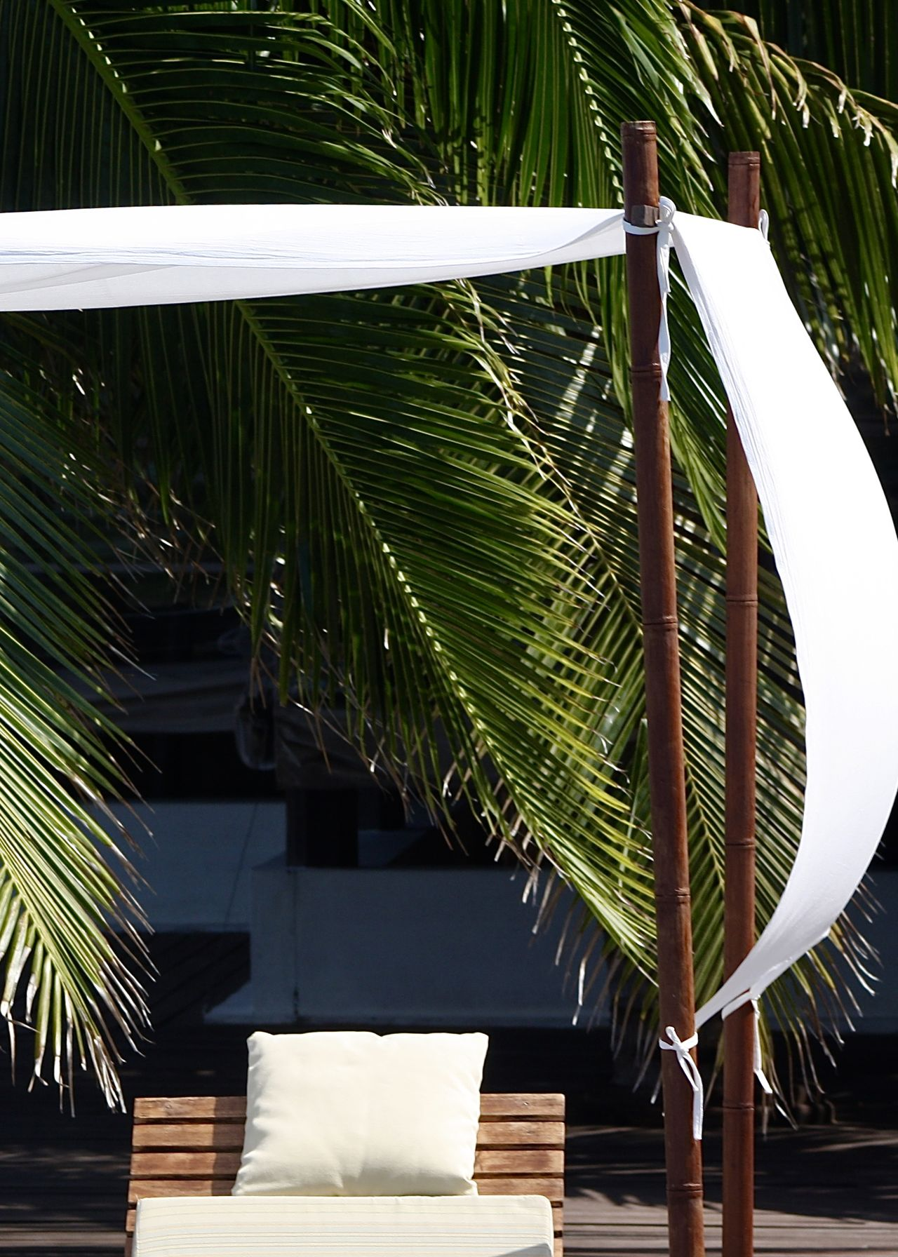 sunbed on pool deck under palm tree Canvas Deck Chair Green And White Green Color Greenery Light And Shadow Nature Outdoors Palm Leaf Palm Tree Pantone Colors By GIZMON Pattern Pillow Plant Plant Relaxing Scenics Summer Sunbathing Sunbed Sunshine Take Your Place Tropical Vacation White