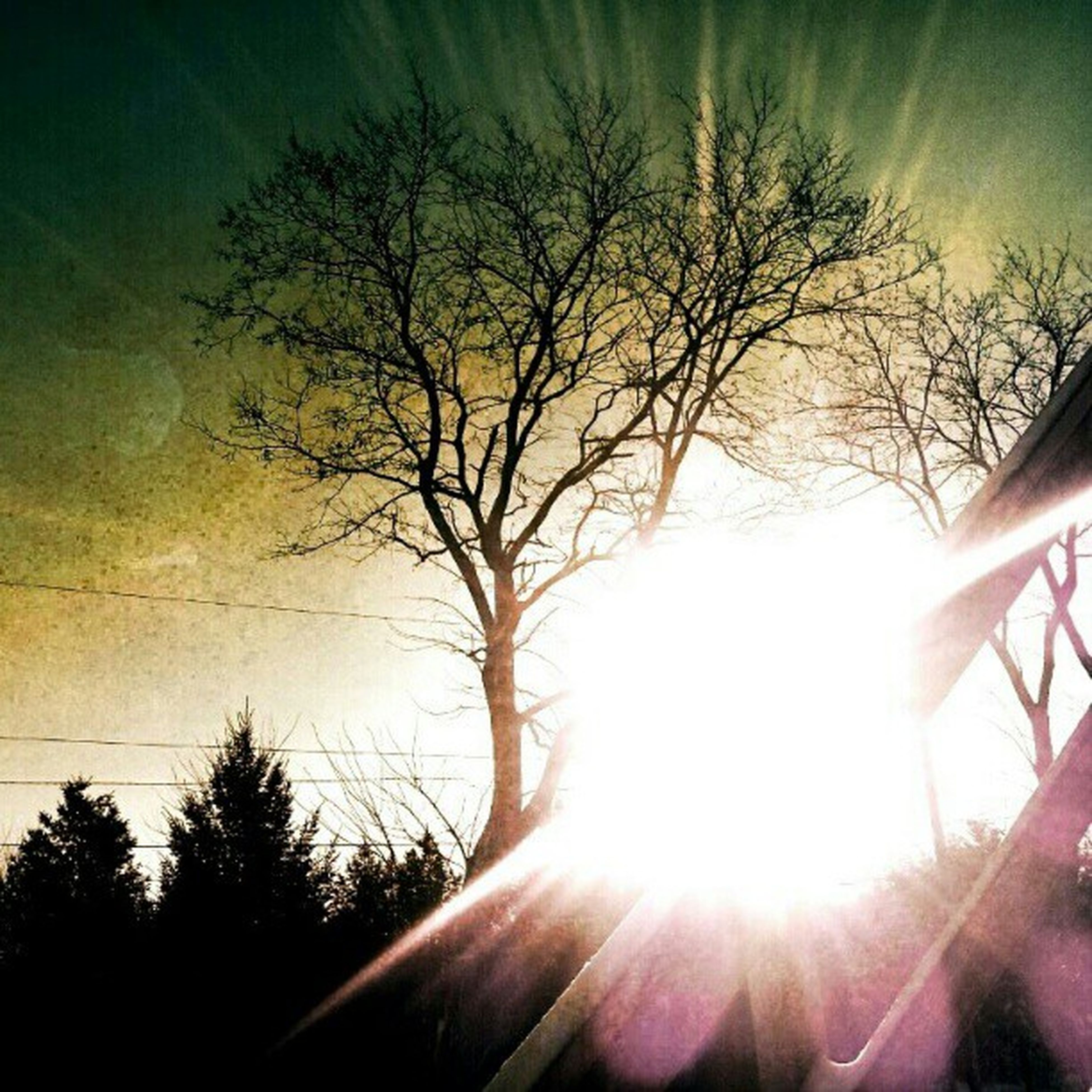 sun, tree, silhouette, sunbeam, sunlight, sunset, lens flare, sky, bare tree, branch, tranquility, nature, beauty in nature, tranquil scene, low angle view, scenics, back lit, bright, outdoors, growth