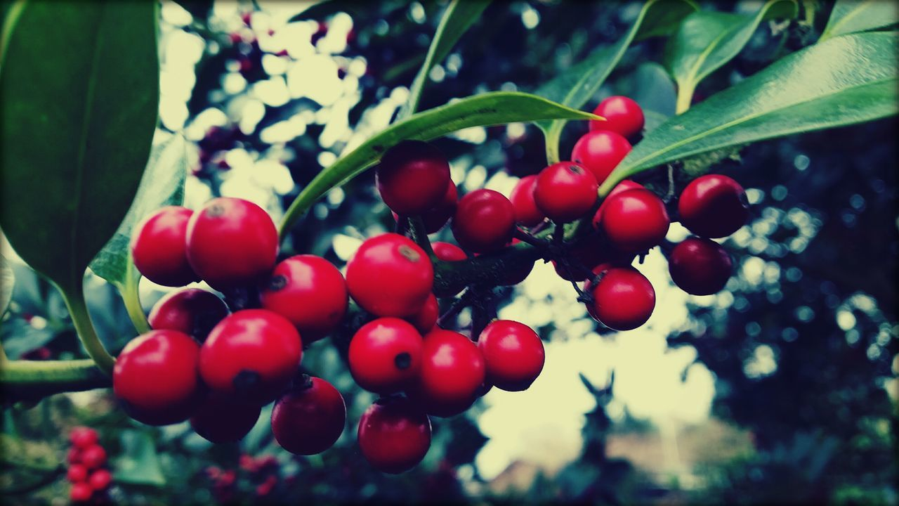 Plant Berrys Nature Outdoor Photography No People