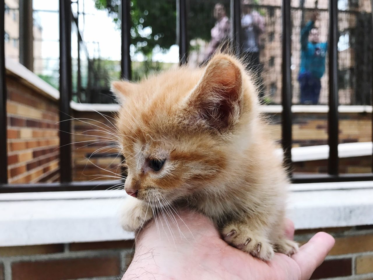 EyeEm Selects Pets Animal Themes One Animal Domestic Cat Domestic Animals One Person Real People Mammal Human Hand Focus On Foreground Holding Day Window Feline Whisker Human Body Part Close-up Outdoors Building Exterior Ginger Cat