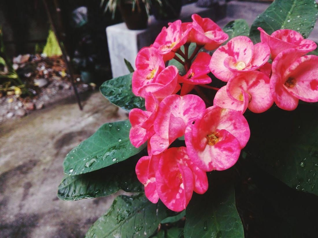 Cactus Flower....EyeEm Best Shots EyeEm Nature Lover Flower Photography EyeEm Flowers Collection Eyem Flower_collection Pink Flower 🌸 Blossom Eyem Macro Macro Photography Macro_collection