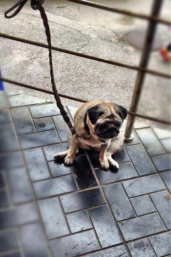 грусть печаль ожидание собака друг человека беригите своих питомцев четвероногий друг