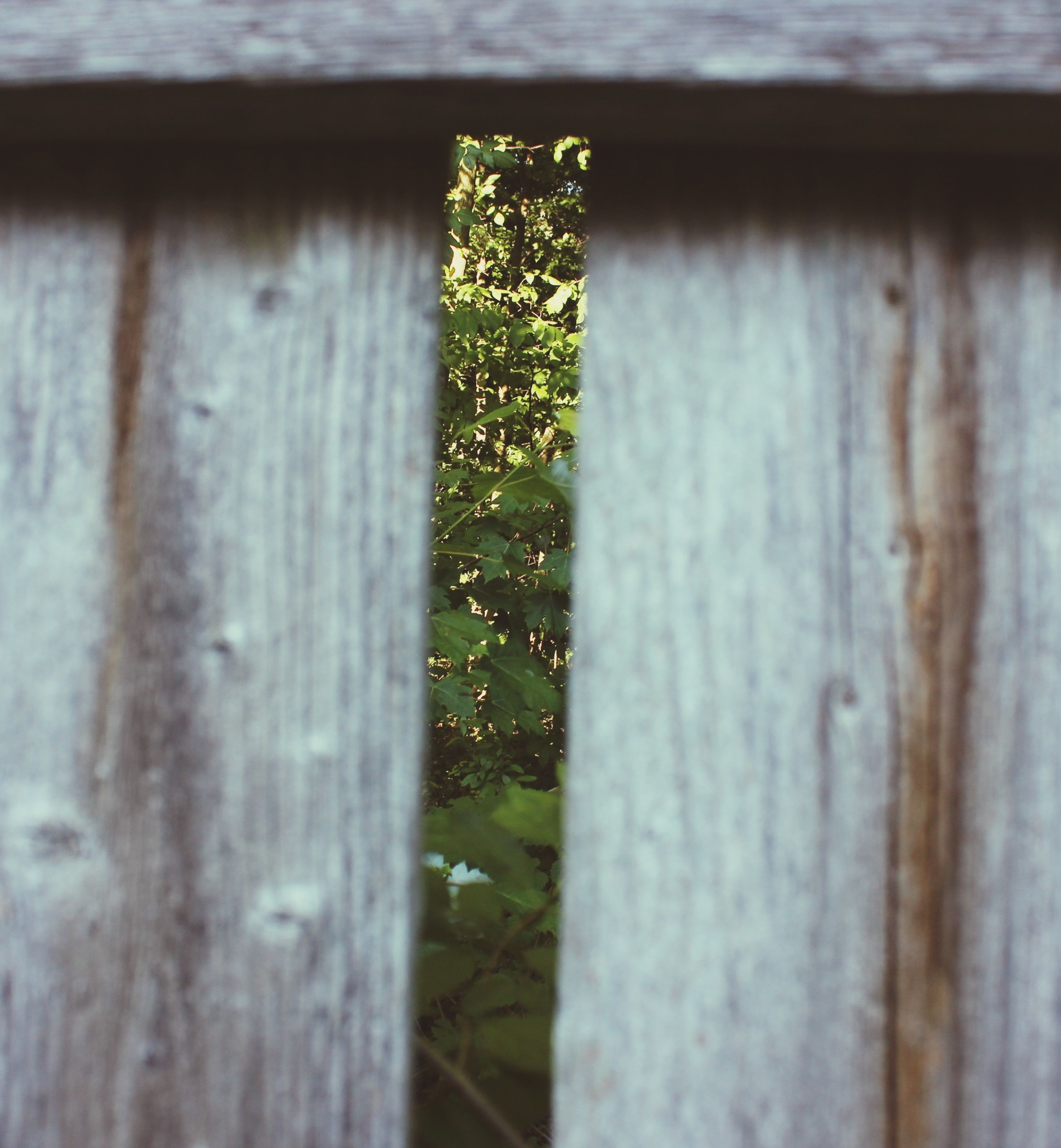 wood - material, built structure, wooden, architecture, building exterior, close-up, growth, house, focus on foreground, selective focus, door, day, green color, outdoors, plant, window, closed, wood, weathered, fence