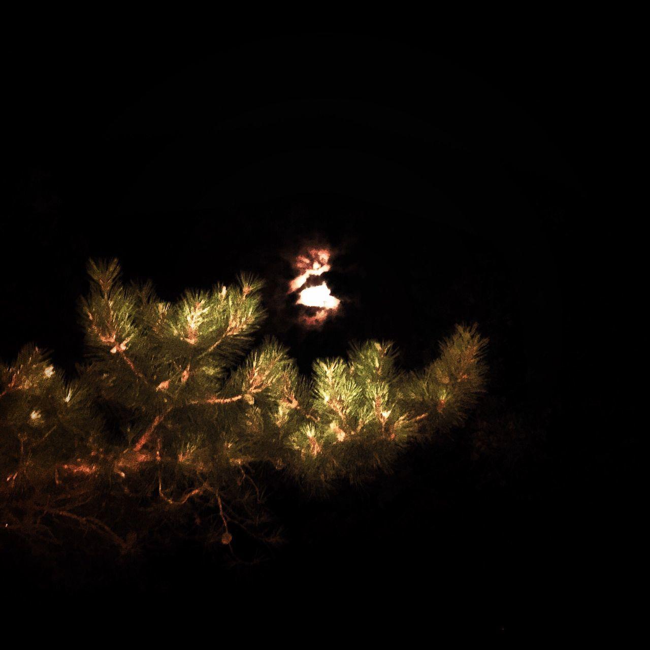 Phoneography Cape Cod Wellfleet Night Flash Tree Pine Trees