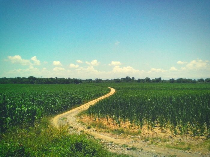 Protecting Where We Play Eyeem Philippines Edge Of The World Road Farm Corn Deceptively Simple Getting Creative Seeing The SightsBlue Skyat Alicia, Isabela, Philippines My Best Photo 2015 Crafted Beauty