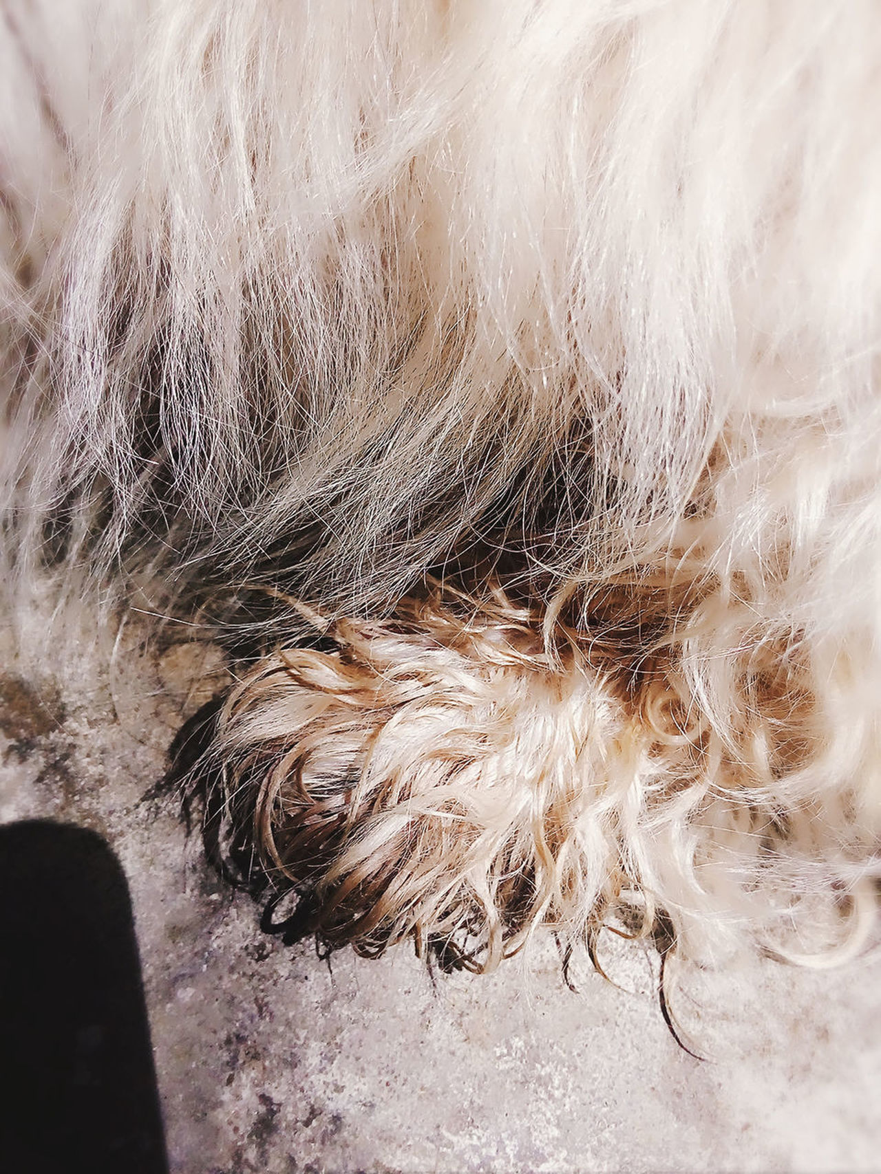 EyeEm Selects Paws And Purrs Paw Of A Pup Wet Textured  Close-up Day Puppy Love ❤ The Week On EyeEm Mix Yourself A Good Time