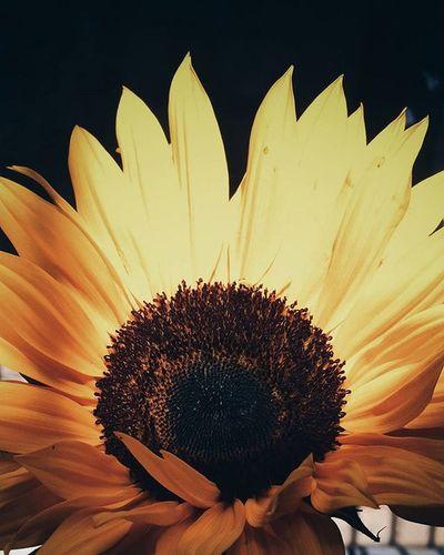 Vscocam VSCO Flor Sun