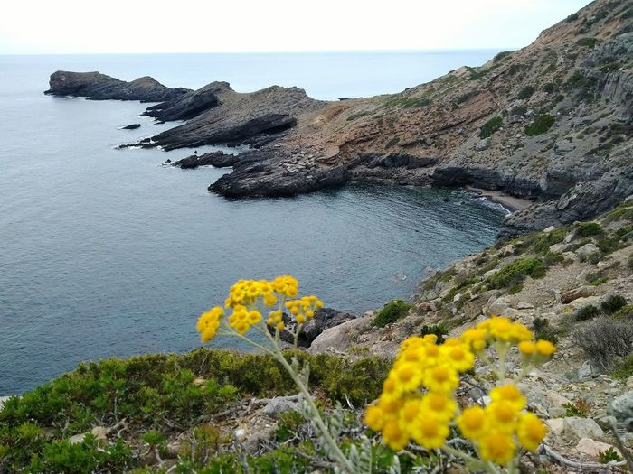 Marettimo in Sicily Nature Flower Rock - Object Beauty In Nature Sea Close-up tranquility No People Scenics Uncultivated Plant Landscape Tranquil Scene Day Outdoors Sky Growth Horizon Over Water Water Flower Head Tranquility The Week On EyeEm EyeEmNewHere EyeEm Nature Lover
