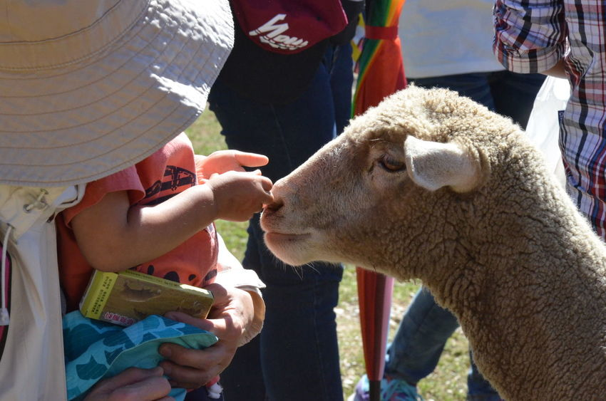 Animal Animal Love Animal Themes Animallovers Everyday Education Feeding  Feeding Animals Focus On Foreground Getting Inspired In Touch With Nature Livestock Love Without Boundaries One Animal Portrait Sheep Side View My Best Photo 2015