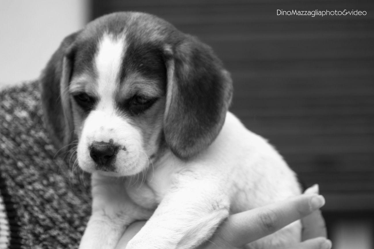 Black & White Blackandwhite I Love My Dog Dog Animals Lovely Puppy Photography Happy Beautiful