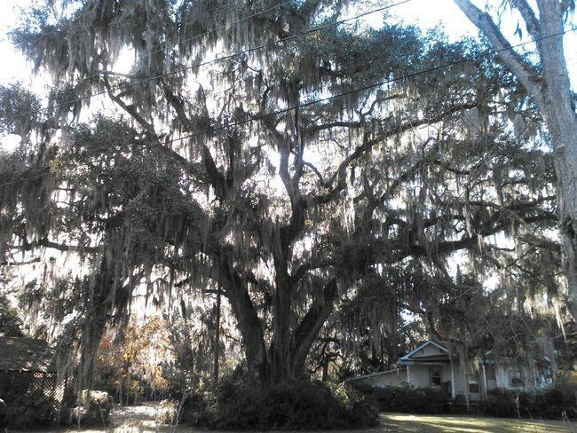Blue Sky Natural Beauty Nature Photography Trees And Sky Oak Tree