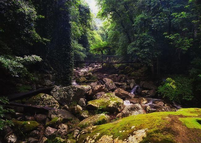 Minnamurra Rainforest Australia Rainforest Nikonphotography