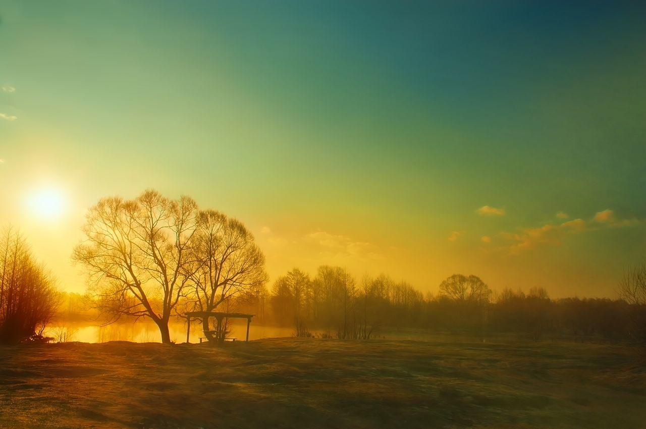 tree, beauty in nature, nature, sunset, tranquility, tranquil scene, field, landscape, no people, outdoors, scenics, cold temperature, sky, bare tree, winter, grass, day
