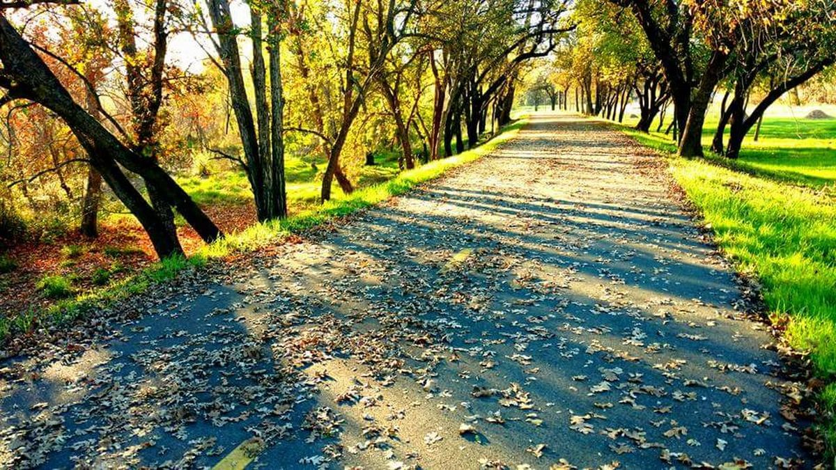 Sunlight Tree Shadow Beauty In Nature Landscape Trail Publicpark Fall Colors Fall Leaves Blooming Outdoors❤ Outdoor Photography Nature Tranquility Scenics Growth Naturewalks