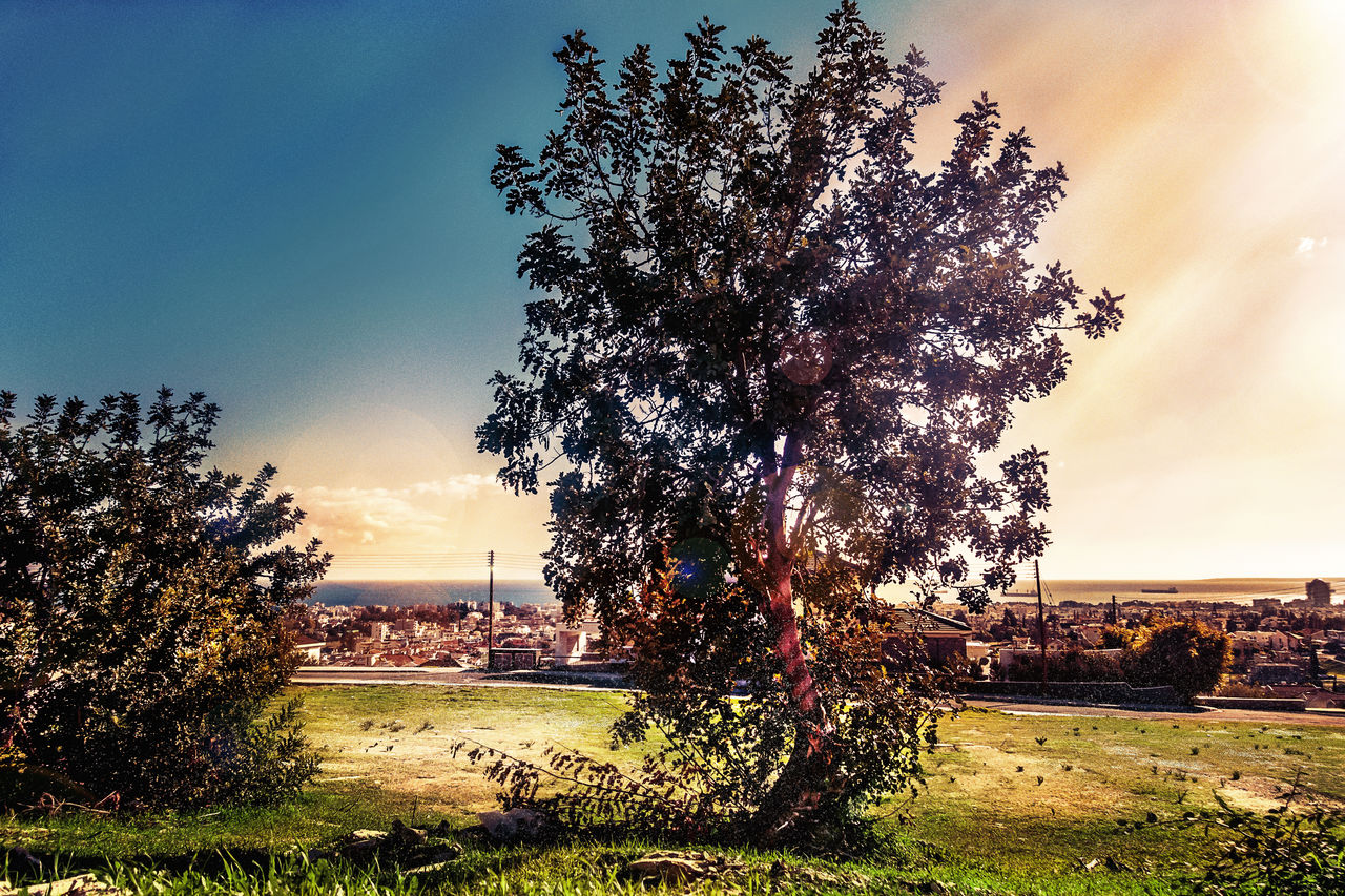 tree, nature, grass, sky, beauty in nature, growth, tranquility, landscape, no people, field, sunlight, outdoors, scenics, day