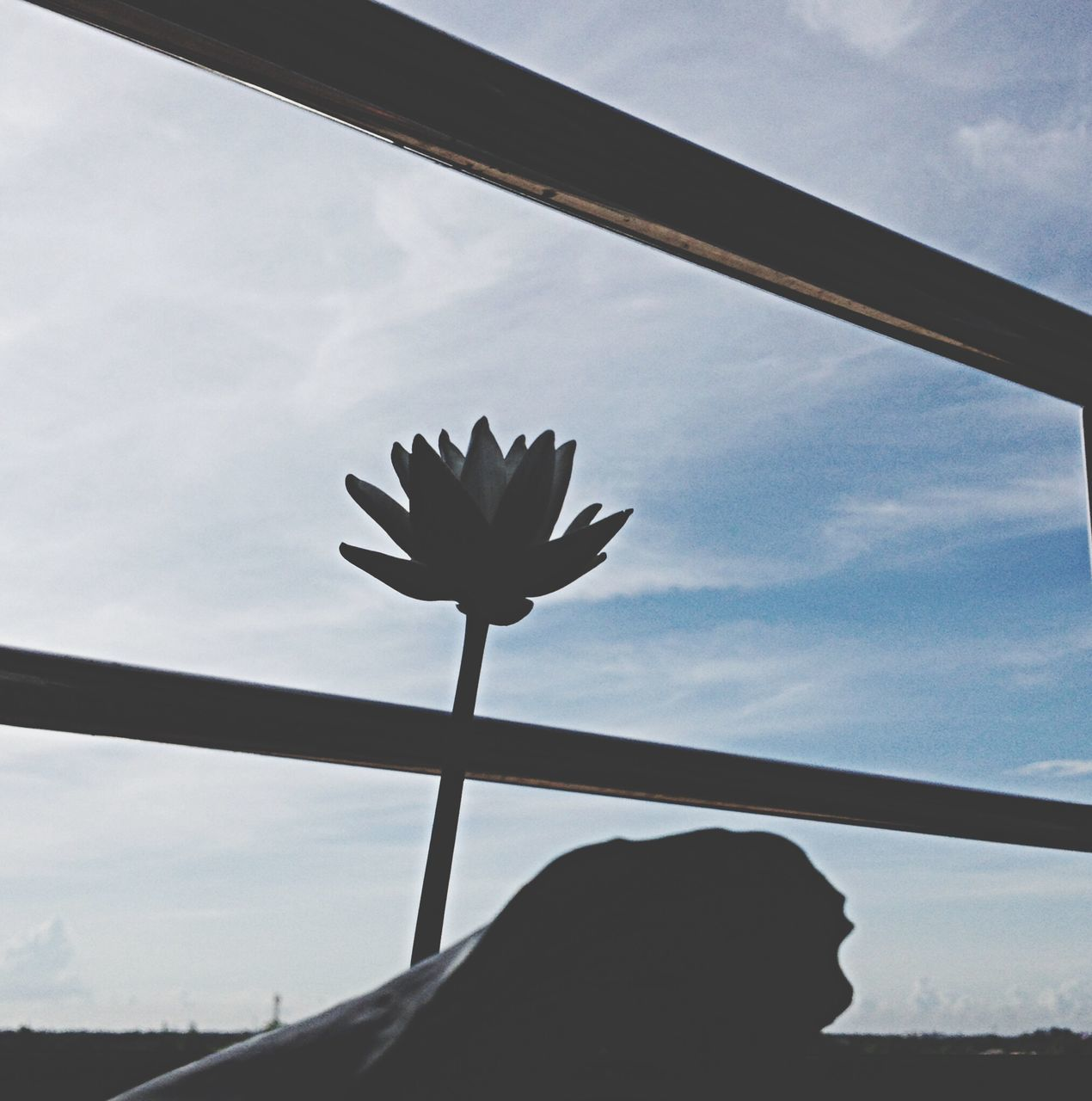 sky, flower, silhouette, low angle view, cloud - sky, outdoors, day, nature, beauty in nature, one person, close-up