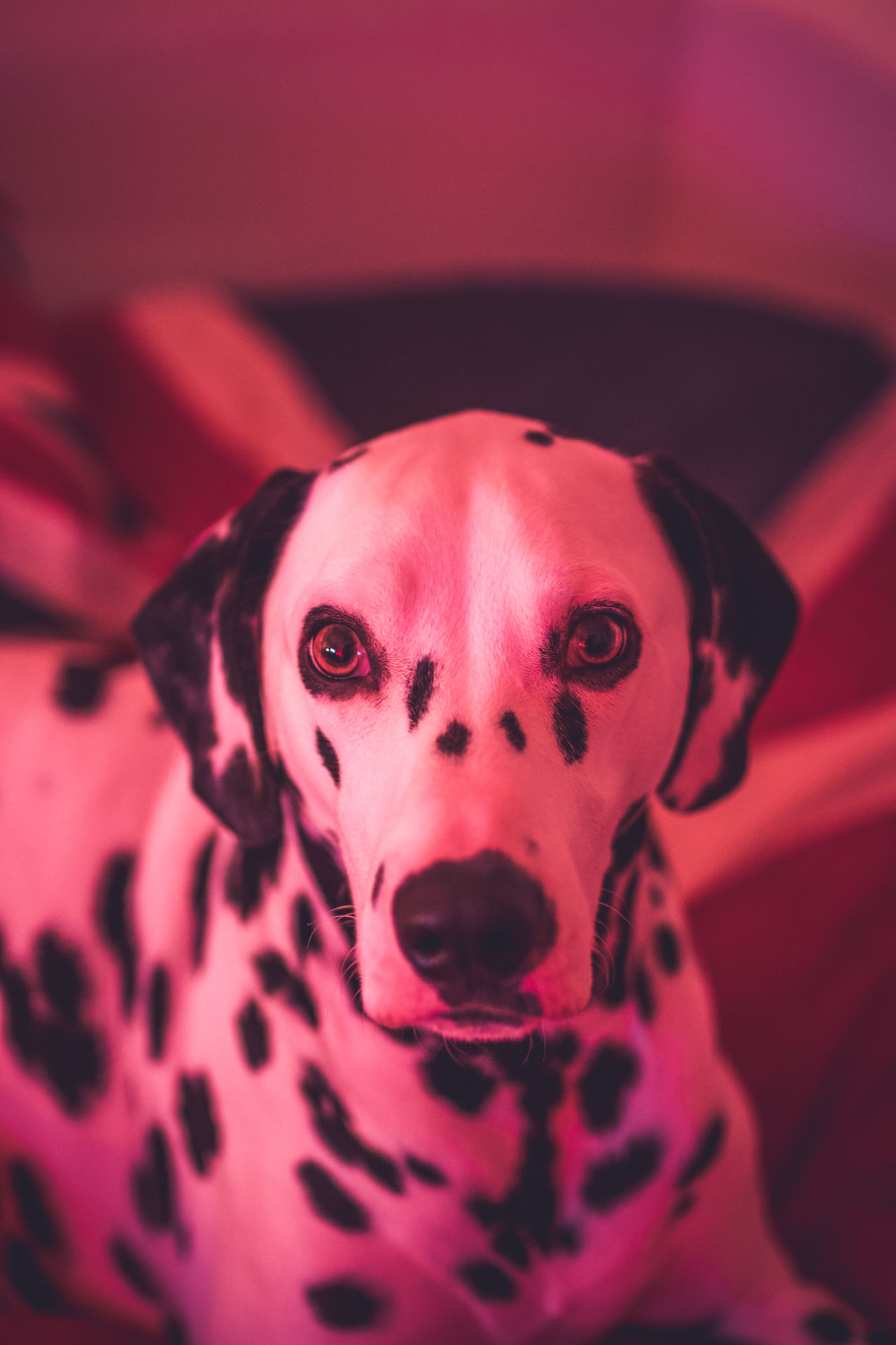 Beautiful stock photos of animals,  Alertness,  Animal Themes,  Bed,  Close-Up