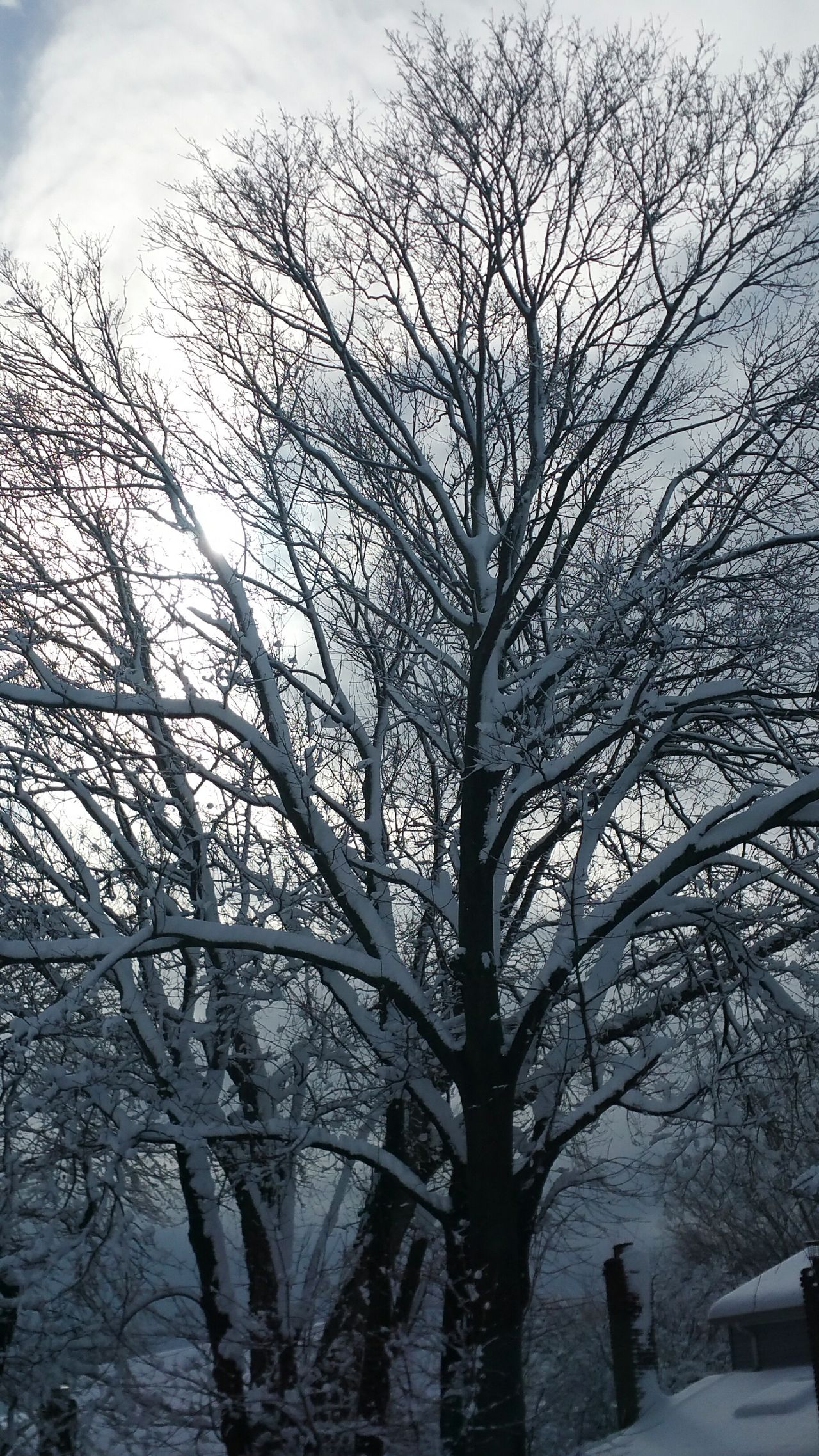 Tree Branch Bare Tree Nature Beauty In Nature Tranquility Cold Temperature Winter Outdoors No People Snow Snowy Trees Snowy Morning White Winter Snowfall In NY Long Island NY Beauty In Nature Snow Branches Morning After The Storm Snow On Rooftops Chimmeys EyeEmNewHere
