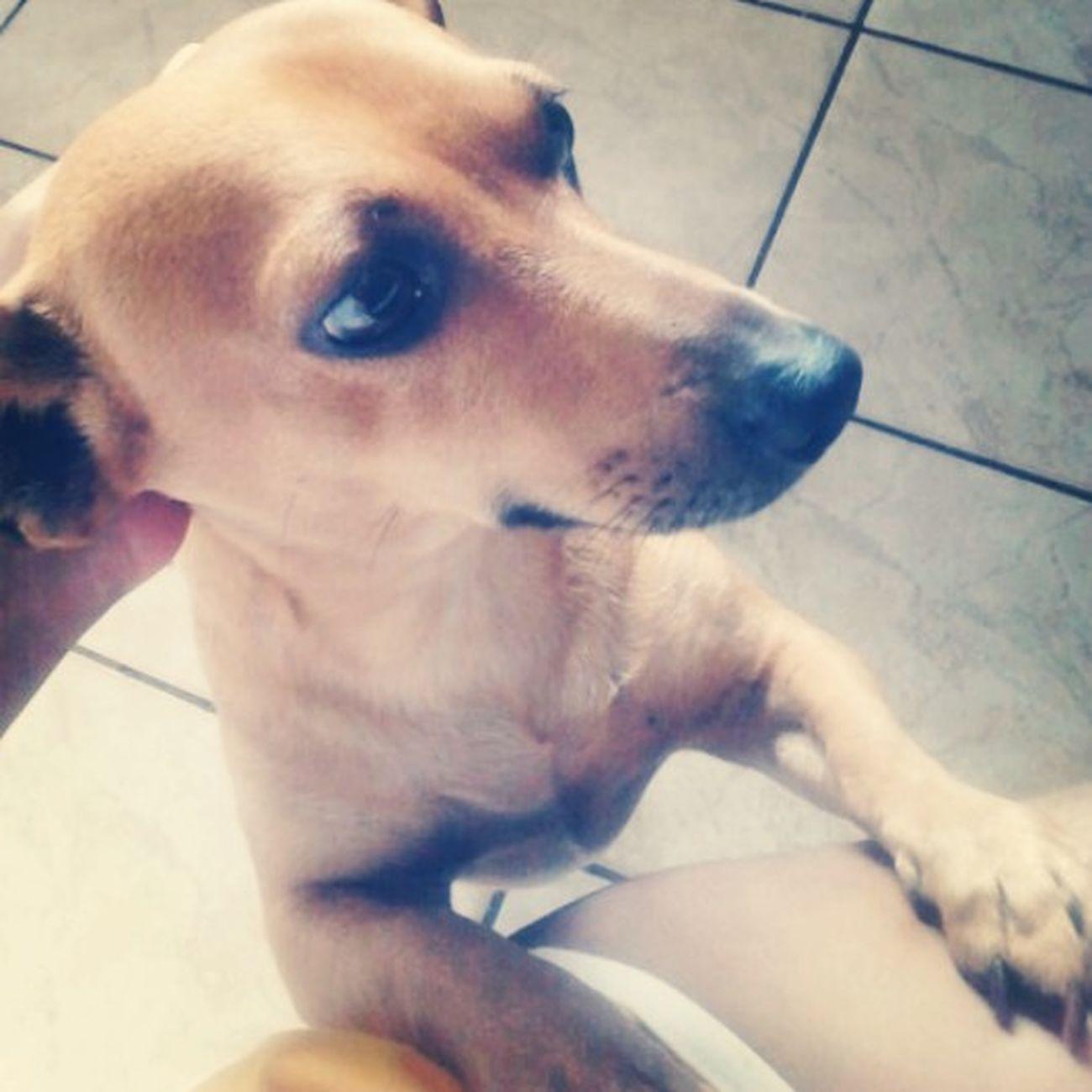 I Love My Dog :) Zeus
