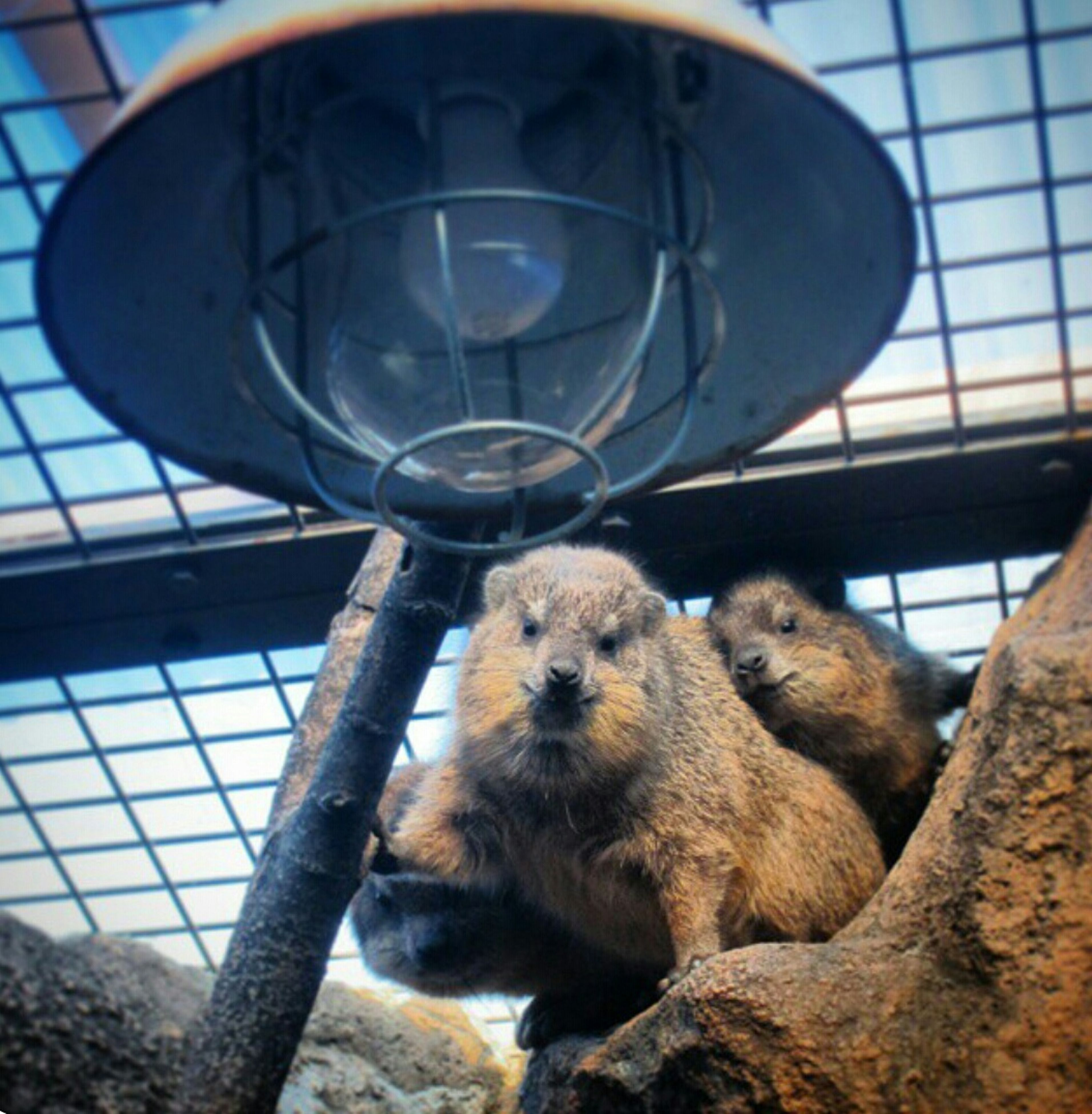 animal themes, one animal, mammal, pets, indoors, domestic animals, dog, low angle view, metal, sitting, sunlight, close-up, no people, day, animals in captivity, lighting equipment, built structure, wildlife, looking at camera