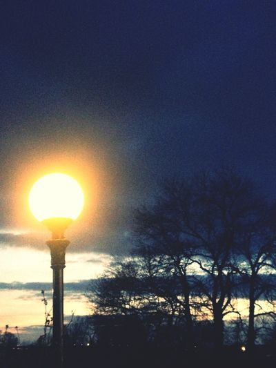 Trees Taking Photos Night Lights Evening Sky