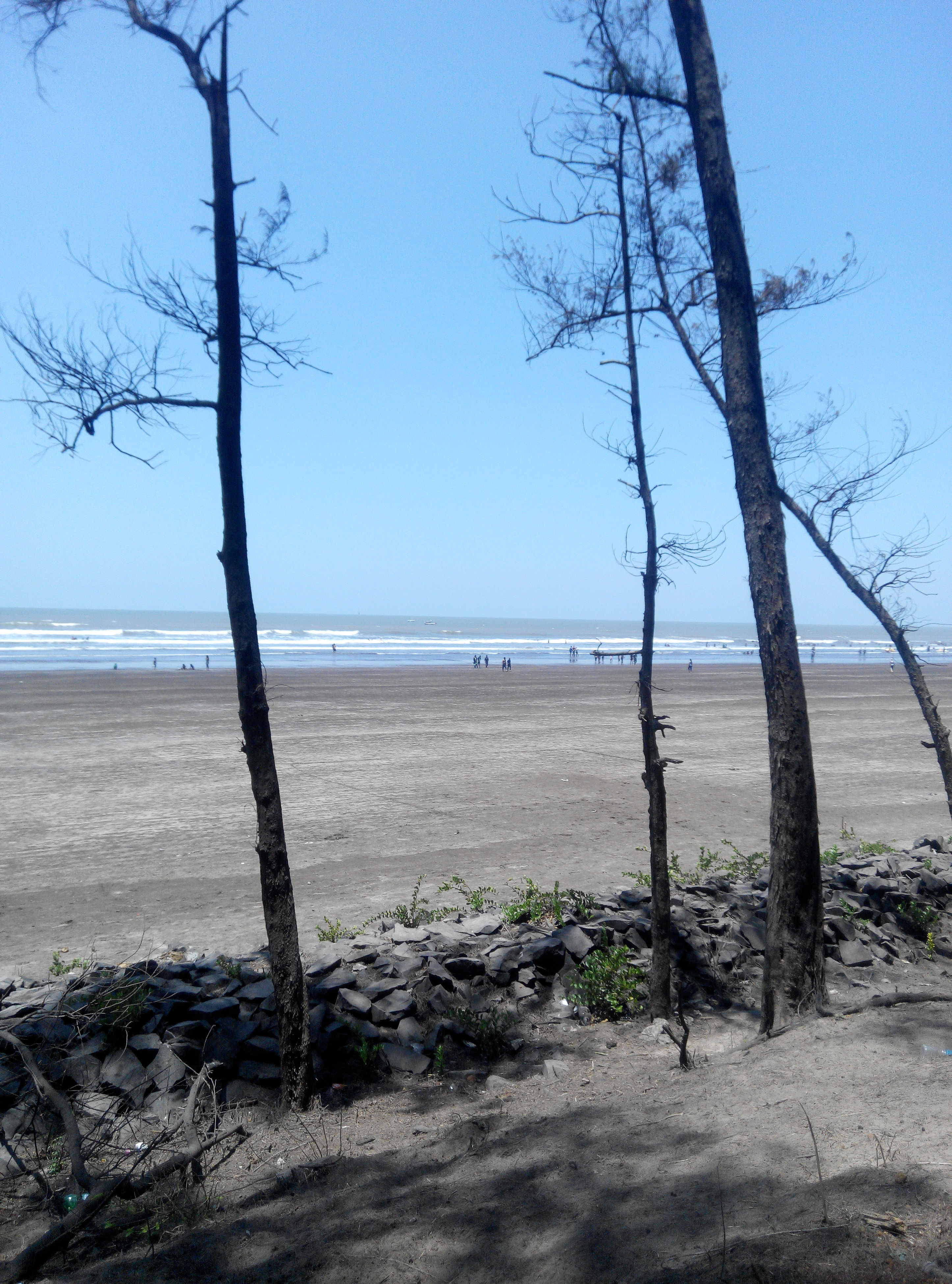 sea, water, tranquility, tranquil scene, horizon over water, clear sky, beach, tree, scenics, tree trunk, shore, beauty in nature, nature, sand, branch, bare tree, blue, sky, shadow, sunlight