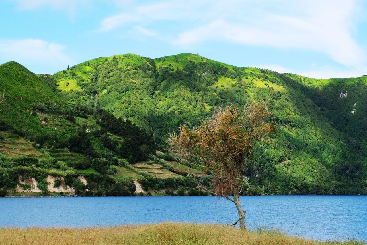 Scenics Nature Water Beauty In Nature Tranquil Scene Trees Landscapes Sky Tranquility Tree Outdoors Idyllic No People Green Color Landscape Growth Day Mountain Lake Colorful Miles Away in Lagoa Das Sete Cidades Sao Miguel , Azores Portugal MISSIONS: The Great Outdoors - 2017 EyeEm Awards