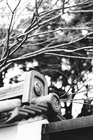 Neopan style <3 Architecture Bokeh Built Structure Clock Close-up Day Lightroom Lights Lights And Shadows Low Angle View Neopan400 No People Outdoors Traditional Tree