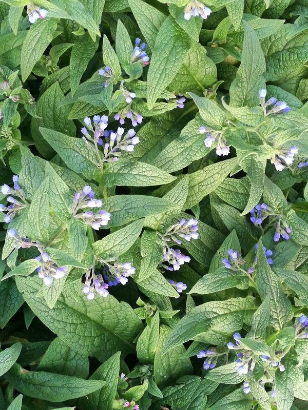 Nature Growth Green Color Plant Beauty In Nature Flower Outdoors No People Freshness Leaf Fragility Close-up Day Backgrounds Flower Head Purple Nature