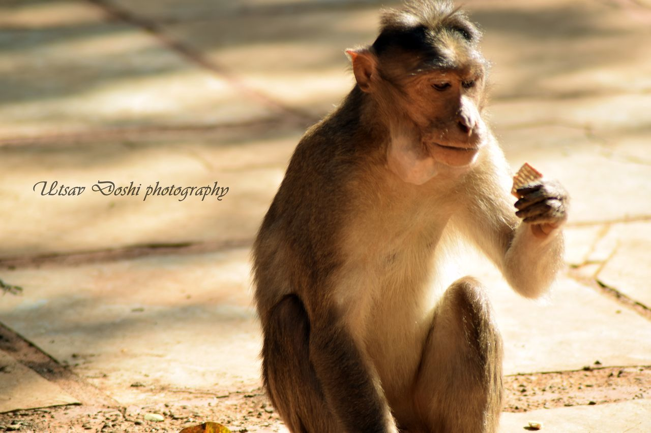 """For some a snack, for some a day's meal"". We can clearly see that how important the food is in one's life."" Animal Themes Dont Waste Food Emotions Of The Eyes Food Porn Humanity At It's Finest Importance Of Food Looking Away Modesty  Monkey"