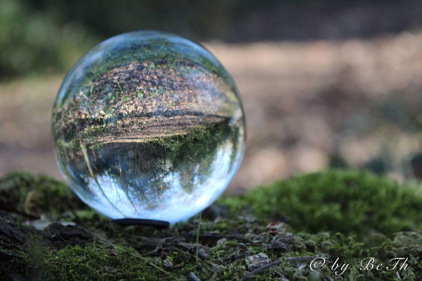 Glaskugelfotografie Glaskugel Glassball Crystal Ball Close-up No People Reflection Outdoors Ball Focus On Foreground Day Fragility Nature Grass Beauty In Nature Sky