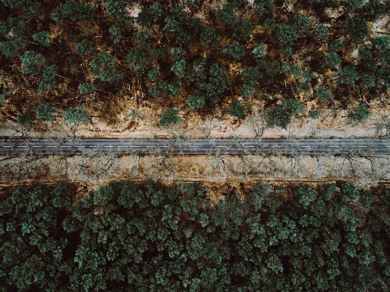 - German Road - Flying High Perspective Bird Perspective No People Full Frame Outdoors Nature Day Growth Tree Close-up Backgrounds Ivy Architecture Road Road Germany EyeEm Best Shots EyeEm Best Edits Landscape Forest EyeEm Nature Lover Beauty Nature From Above
