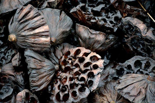 Showcase: November Lishui China Lotus Flower Lotus Death Beauty Of Decay Rot Unusual Beauty