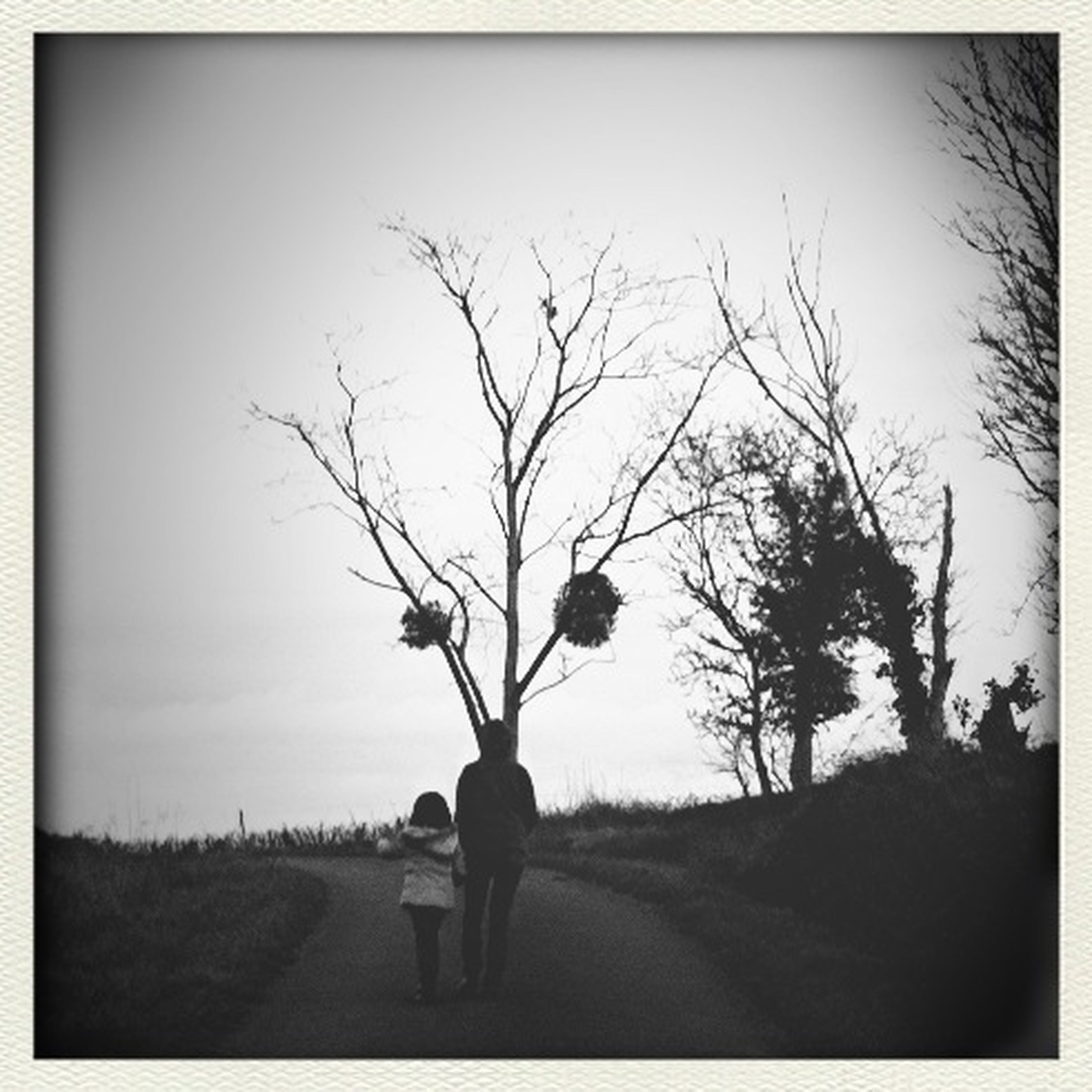transfer print, tree, bare tree, auto post production filter, rear view, branch, lifestyles, silhouette, road, field, men, sky, walking, nature, full length, clear sky, the way forward, leisure activity