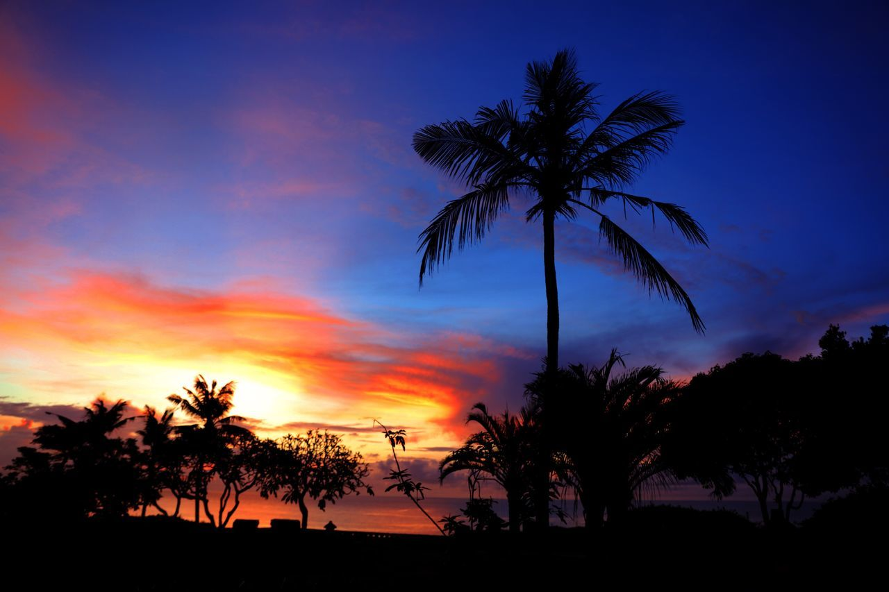 Palm Tree Sunset Tree Sky Silhouette Nature Scenics Beauty In Nature Growth Beach Sea No People Horizon Over Water Outdoors Palm Frond