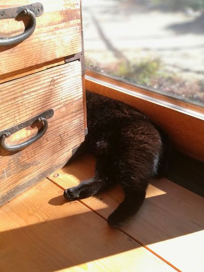 Black Cat Cute Lovely Window Chest Sleeping Cat Cat Lovers Sunlight House Lying Down Wood Materials No People One Animal Day Close-up Indoors  Animal Themes Mammal