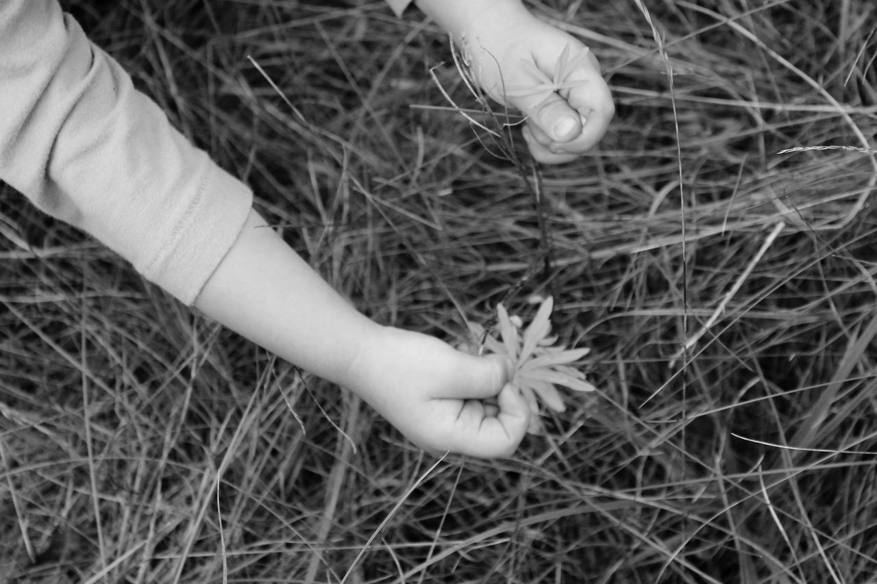 Black & White Black And White Blackandwhite Blackandwhite Photography Child Close-up Field Flowers Grass Hands Meadow Meadow Flowers Meadowlands Monochromatic Monochrome Nature Person