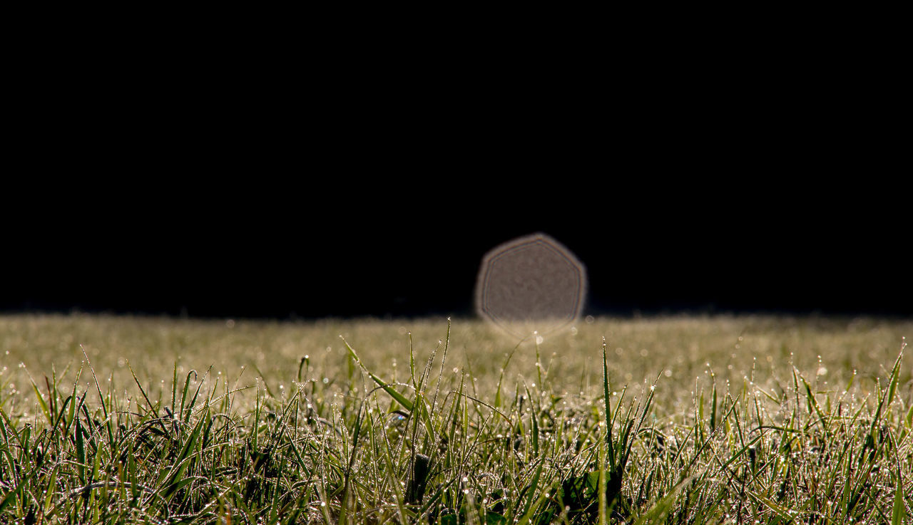 field, grass, night, moon, tranquility, tranquil scene, no people, nature, outdoors, growth, beauty in nature, clear sky, hay bale, wheat, black background, close-up, sky, astronomy