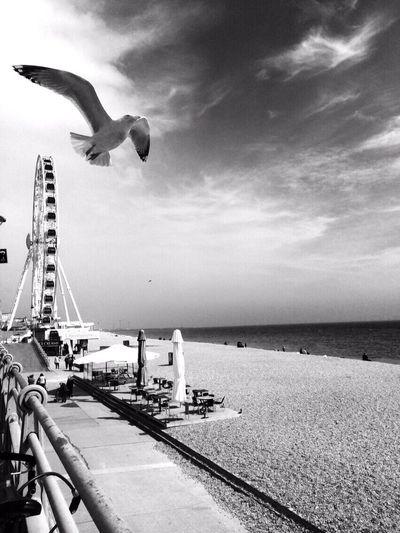 Beach Sea Side Blackandwhite Monochrome Blackandwhite Portrait Wheel Lovethisplace