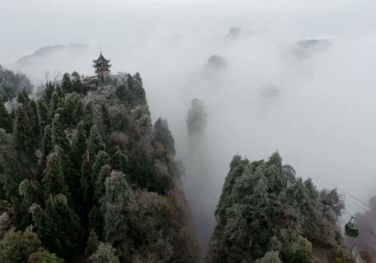 Zhangjiajie Fog Forest Pinaceae Weather Landscape Social Issues Tree Nature WoodLand Pine Woodland Outdoors Health Spa Smoke - Physical Structure Mountain Natural Parkland No People Pine Wood Treetop Day Sky Zhangjiajie Photooftheday Beautiful Nature Instagood Mountain Range First Eyeem Photo