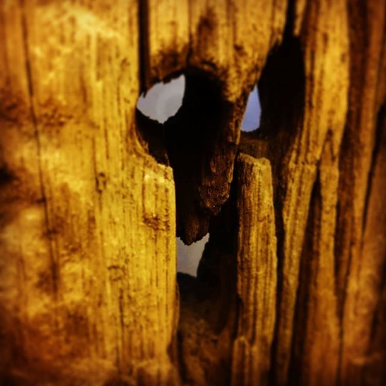Hidden face EyeEm Hiddenface Wood Woodstructure Looktwice Specialphoto Specialpic Sonyxperia XPERIA Xperiaphotoacademy XperiaZ3compact