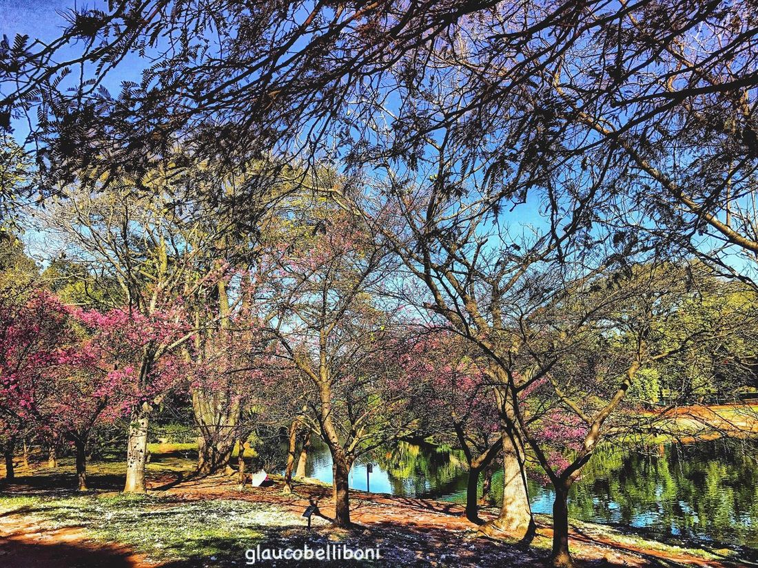 Ibirapuera Park in São Paulo , Brazil Tree Nature Beauty In Nature Tranquility Nature_collection Nature Photography Parque Ibirapuera Urban Landscape Natural Landscapes EyeEm Gallery EyeEm Nature Lover Sao Paulo - Brazil Saopaulocity Saopaulowalk Saopaulo_originals Urban Nature Park View Parkscapes